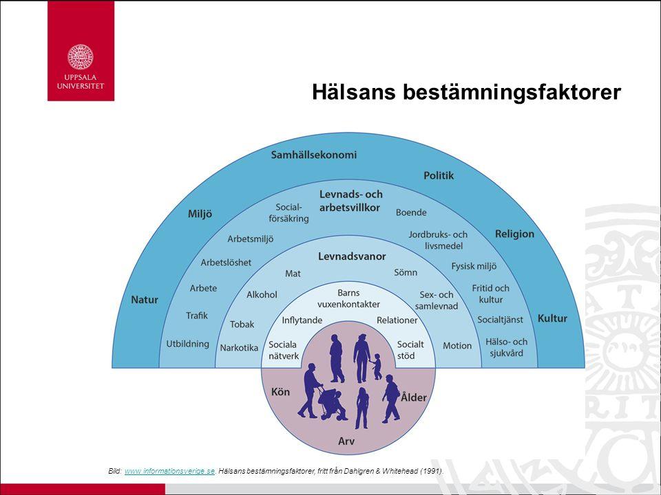 Hälsans bestämningsfaktorer Bild: www.informationsverige.se. Hälsans bestämningsfaktorer, fritt från Dahlgren & Whitehead (1991).www.informationsverig