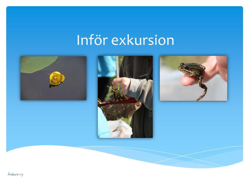 Årskurs 1-3 Inför exkursion  Vad äter växtplankton.
