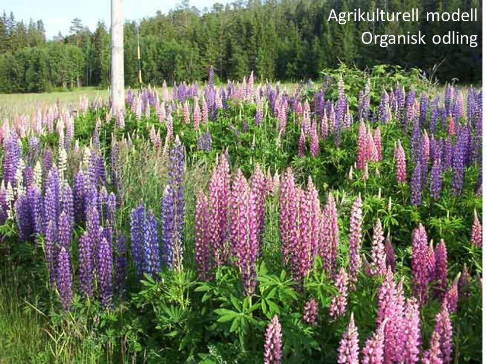 Agrikulturell modell Organisk odling