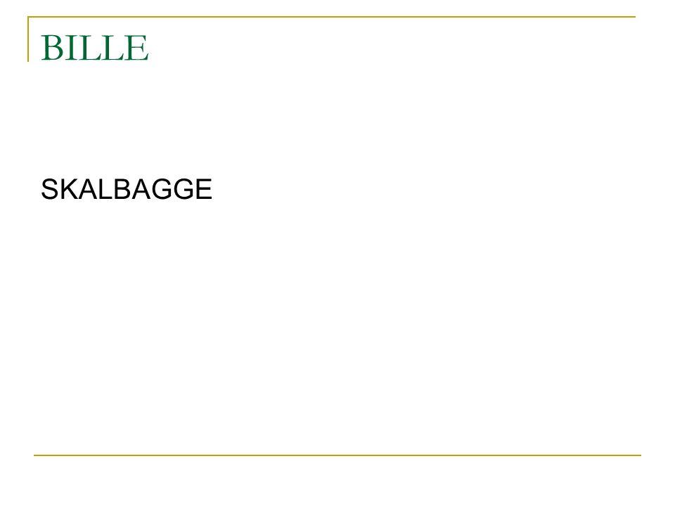 BILLE SKALBAGGE
