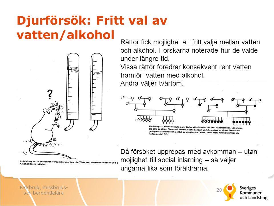 Djurförsök: Fritt val av vatten/alkohol Då försöket upprepas med avkomman – utan möjlighet till social inlärning – så väljer ungarna lika som föräldra