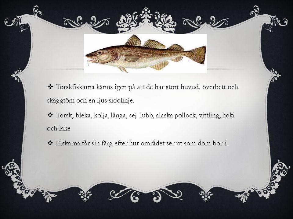  Torskfiskarna känns igen på att de har stort huvud, överbett och skäggtöm och en ljus sidolinje.