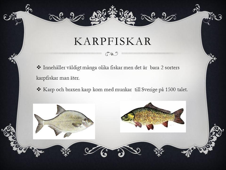 KARPFISKAR  Innehåller väldigt många olika fiskar men det är bara 2 sorters karpfiskar man äter.
