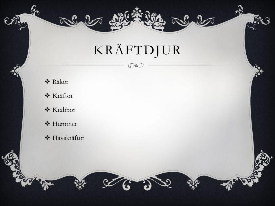 KRÄFTDJUR  Räkor  Kräftor  Krabbor  Hummer  Havskräftor