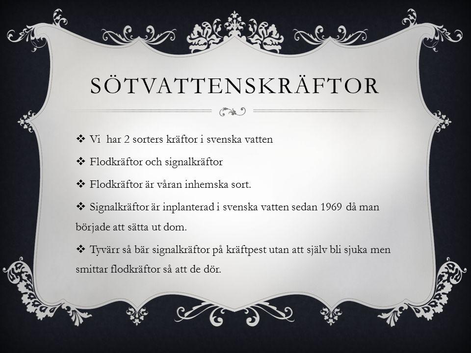 SÖTVATTENSKRÄFTOR  Vi har 2 sorters kräftor i svenska vatten  Flodkräftor och signalkräftor  Flodkräftor är våran inhemska sort.