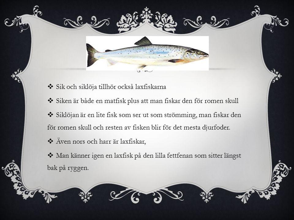  Sik och siklöja tillhör också laxfiskarna  Siken är både en matfisk plus att man fiskar den för romen skull  Siklöjan är en lite fisk som ser ut som strömming, man fiskar den för romen skull och resten av fisken blir för det mesta djurfoder.