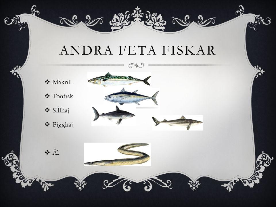 ANDRA FETA FISKAR  Makrill  Tonfisk  Sillhaj  Pigghaj  Ål