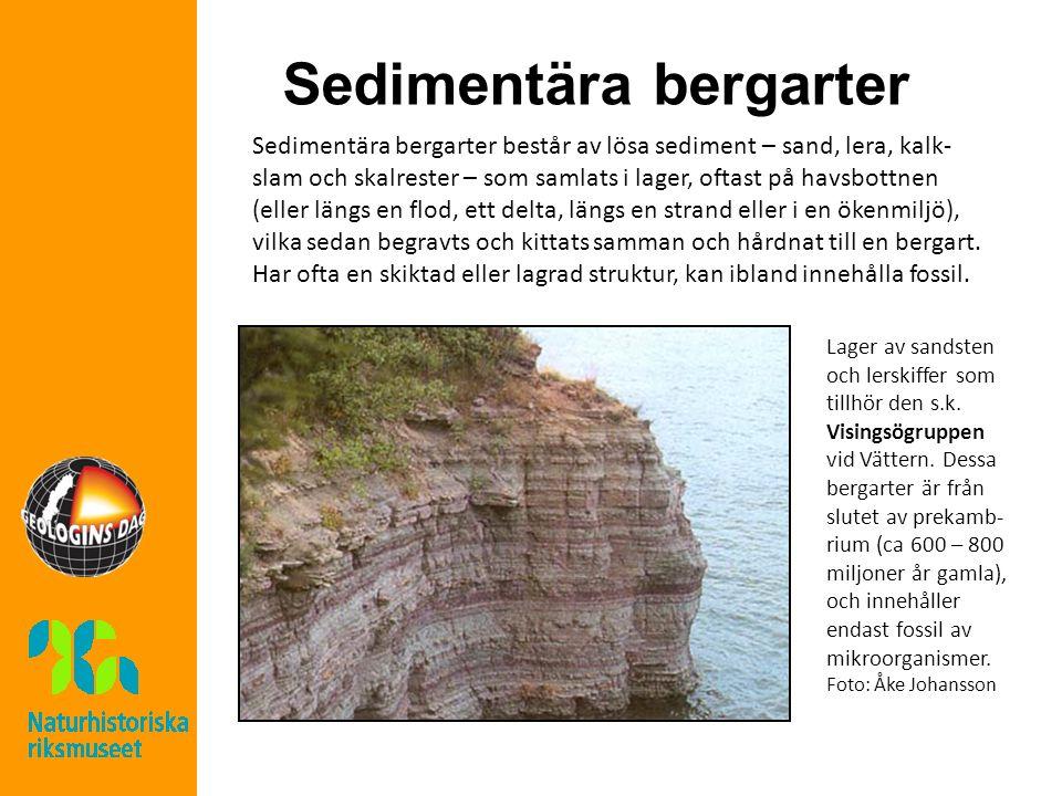 Sedimentära bergarter Sedimentära bergarter består av lösa sediment – sand, lera, kalk- slam och skalrester – som samlats i lager, oftast på havsbottnen (eller längs en flod, ett delta, längs en strand eller i en ökenmiljö), vilka sedan begravts och kittats samman och hårdnat till en bergart.