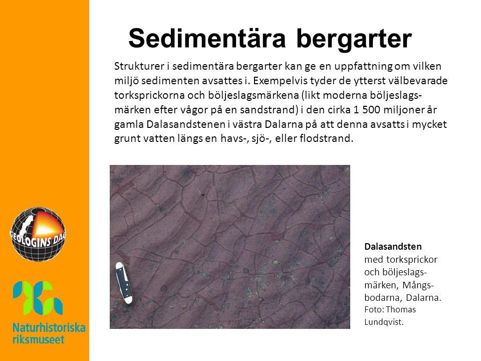 Sedimentära bergarter Strukturer i sedimentära bergarter kan ge en uppfattning om vilken miljö sedimenten avsattes i. Exempelvis tyder de ytterst välb