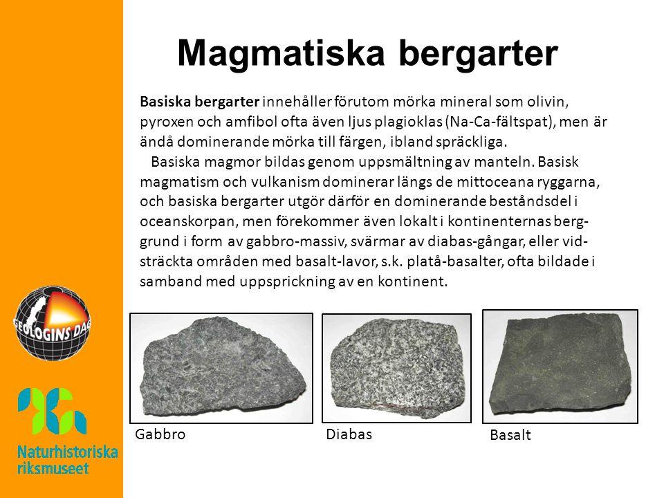 Magmatiska bergarter Basiska bergarter innehåller förutom mörka mineral som olivin, pyroxen och amfibol ofta även ljus plagioklas (Na-Ca-fältspat), me