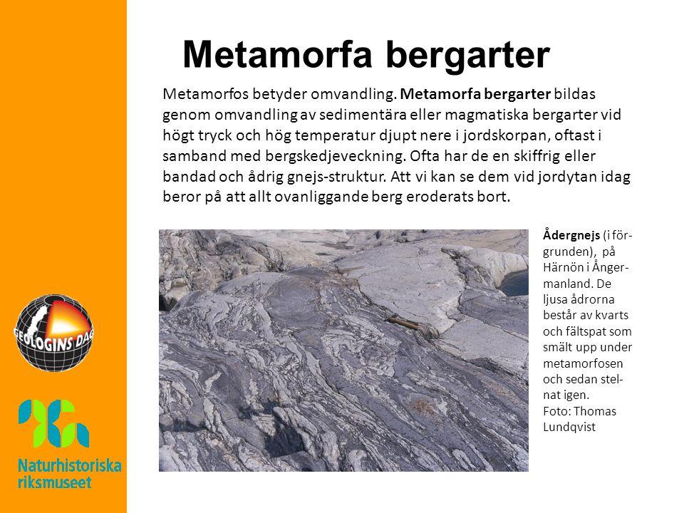 Metamorfa bergarter Metamorfos betyder omvandling. Metamorfa bergarter bildas genom omvandling av sedimentära eller magmatiska bergarter vid högt tryc