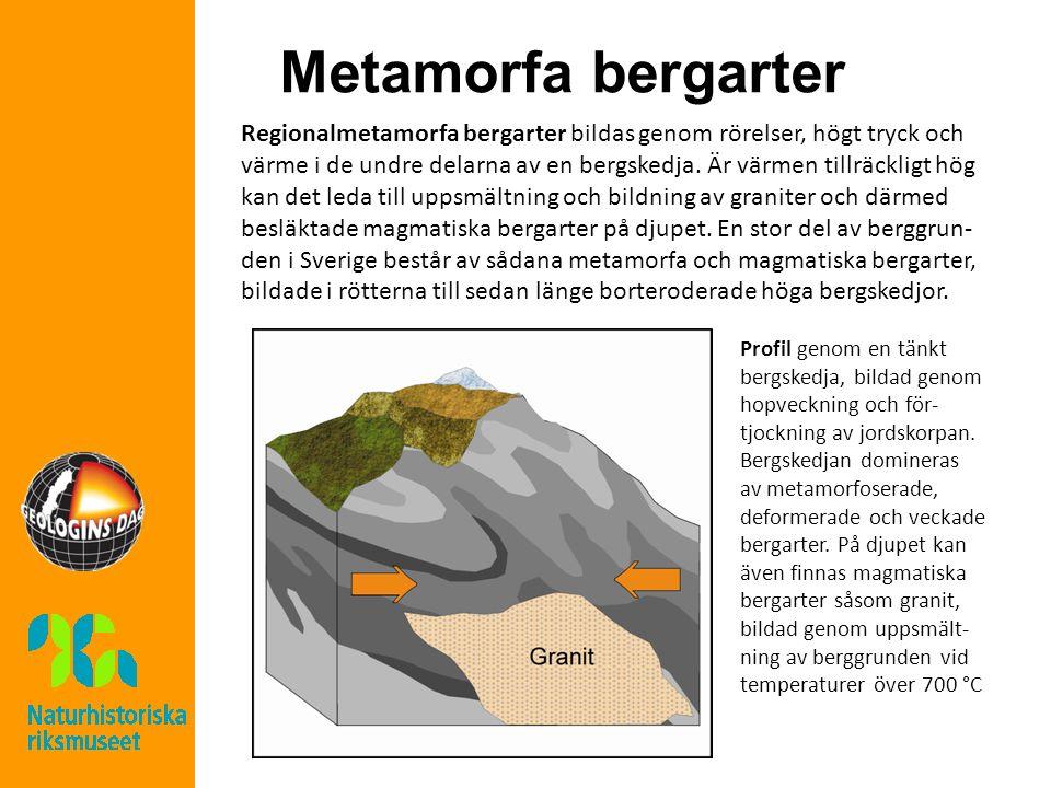 Metamorfa bergarter Regionalmetamorfa bergarter bildas genom rörelser, högt tryck och värme i de undre delarna av en bergskedja.