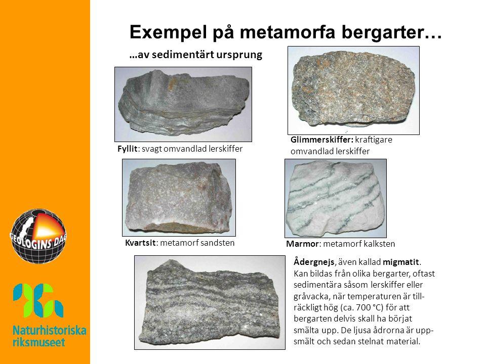 Exempel på metamorfa bergarter… …av sedimentärt ursprung Fyllit: svagt omvandlad lerskiffer Glimmerskiffer: kraftigare omvandlad lerskiffer Kvartsit: metamorf sandsten Marmor: metamorf kalksten Ådergnejs, även kallad migmatit.