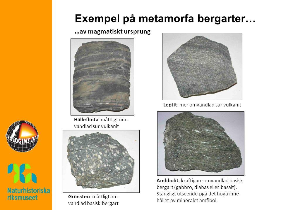 Exempel på metamorfa bergarter… …av magmatiskt ursprung Hälleflinta: måttligt om- vandlad sur vulkanit Leptit: mer omvandlad sur vulkanit Grönsten: måttligt om- vandlad basisk bergart Amfibolit: kraftigare omvandlad basisk bergart (gabbro, diabas eller basalt).