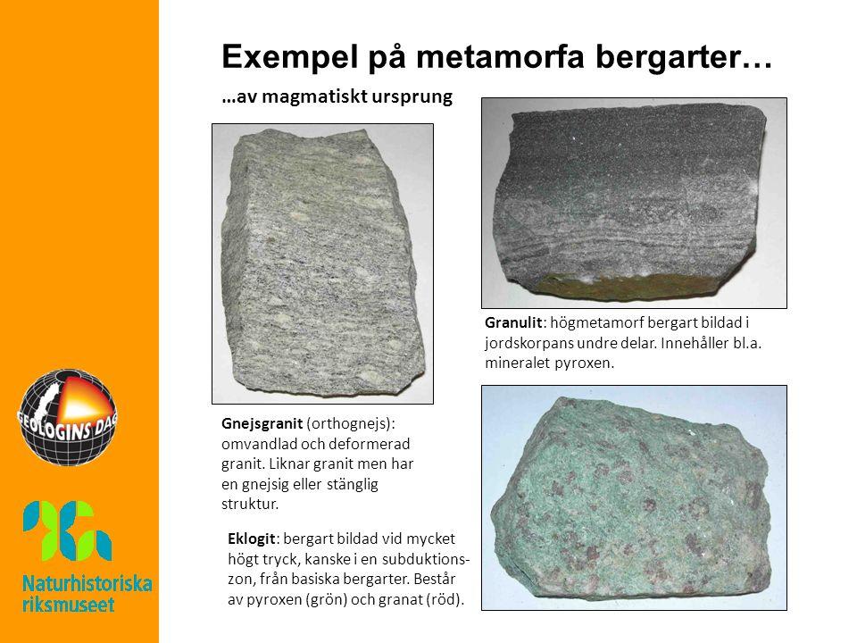 Exempel på metamorfa bergarter… …av magmatiskt ursprung Gnejsgranit (orthognejs): omvandlad och deformerad granit.