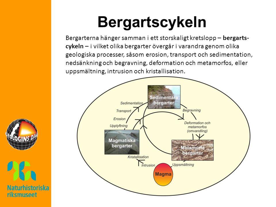 Bergartscykeln Bergarterna hänger samman i ett storskaligt kretslopp – bergarts- cykeln – i vilket olika bergarter övergår i varandra genom olika geologiska processer, såsom erosion, transport och sedimentation, nedsänkning och begravning, deformation och metamorfos, eller uppsmältning, intrusion och kristallisation.