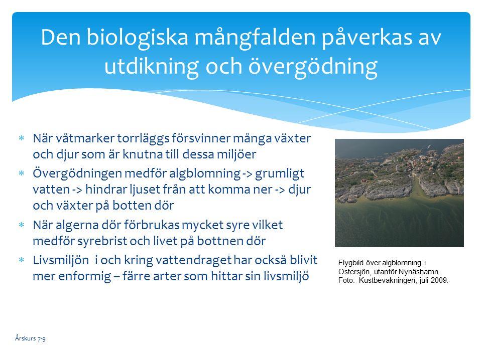  När våtmarker torrläggs försvinner många växter och djur som är knutna till dessa miljöer  Övergödningen medför algblomning -> grumligt vatten -> hindrar ljuset från att komma ner -> djur och växter på botten dör  När algerna dör förbrukas mycket syre vilket medför syrebrist och livet på bottnen dör  Livsmiljön i och kring vattendraget har också blivit mer enformig – färre arter som hittar sin livsmiljö Den biologiska mångfalden påverkas av utdikning och övergödning Flygbild över algblomning i Östersjön, utanför Nynäshamn.