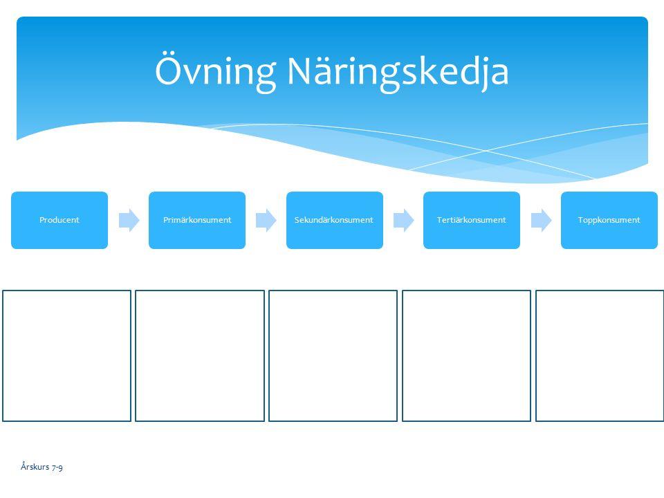 Övning Näringskedja Årskurs 7-9