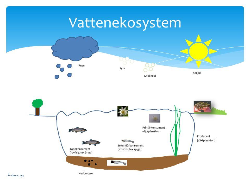 Årskurs 7-9 Vattenekosystem