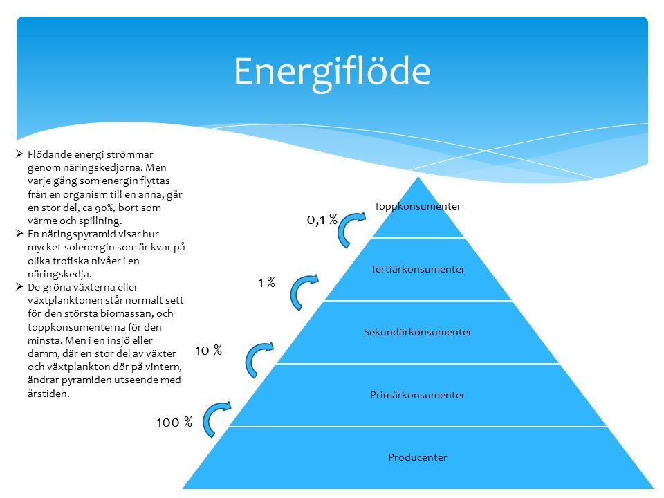 Energiflöde  Flödande energi strömmar genom näringskedjorna.