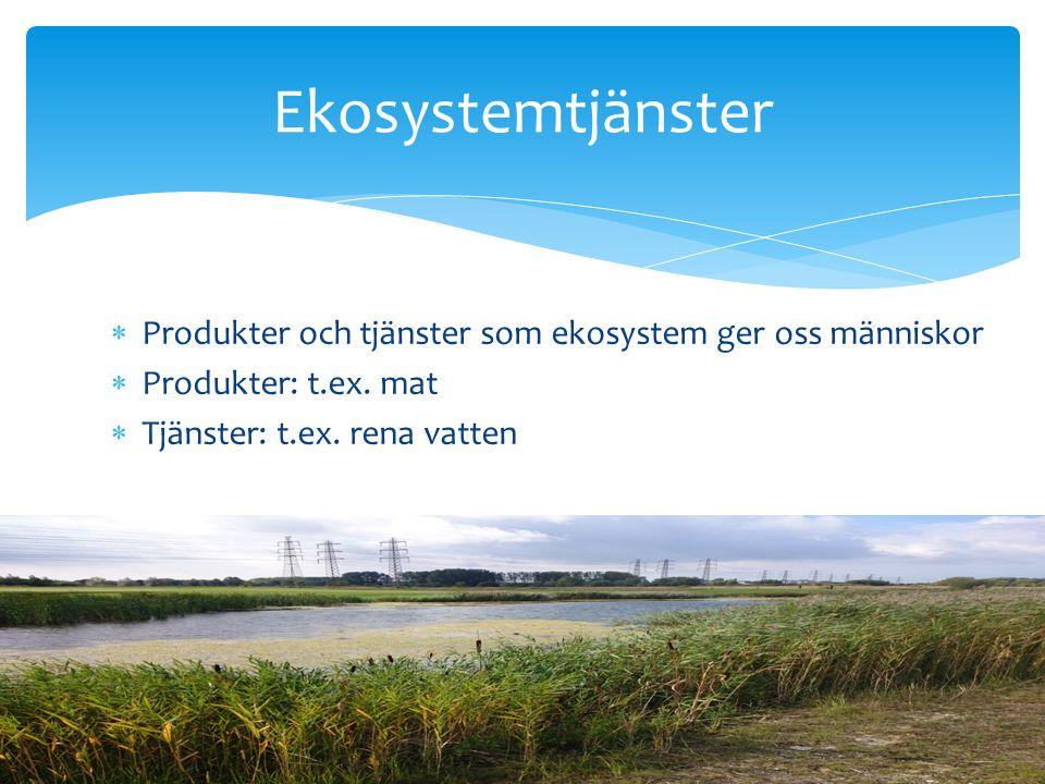  Produkter och tjänster som ekosystem ger oss människor  Produkter: t.ex.