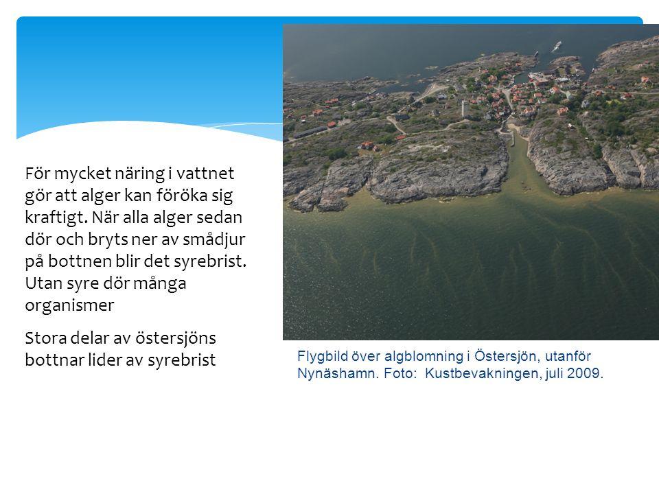 Flygbild över algblomning i Östersjön, utanför Nynäshamn.