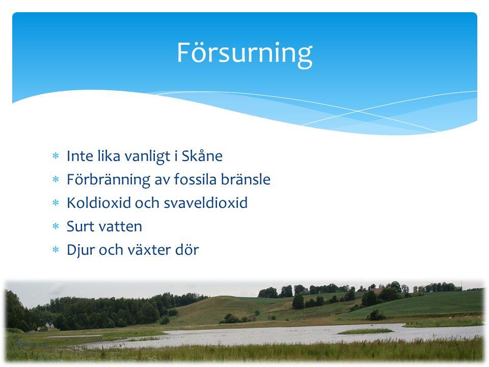  Inte lika vanligt i Skåne  Förbränning av fossila bränsle  Koldioxid och svaveldioxid  Surt vatten  Djur och växter dör Försurning Årskurs 4-6