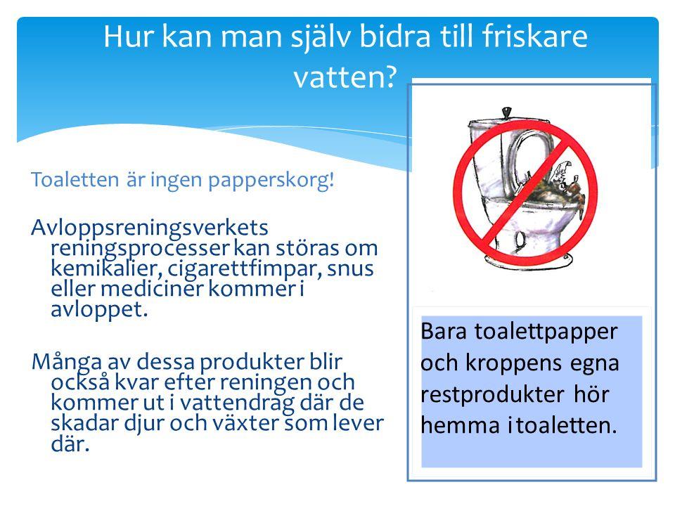 Hur kan man själv bidra till friskare vatten. Toaletten är ingen papperskorg.