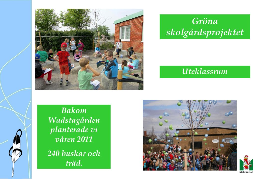 Gröna skolgårdsprojektet Bakom Wadstagården planterade vi våren 2011 240 buskar och träd.