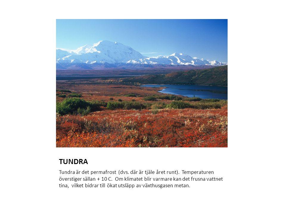 TUNDRA Tundra är det permafrost (dvs. där är tjäle året runt). Temperaturen överstiger sällan + 10 C. Om klimatet blir varmare kan det frusna vattnet