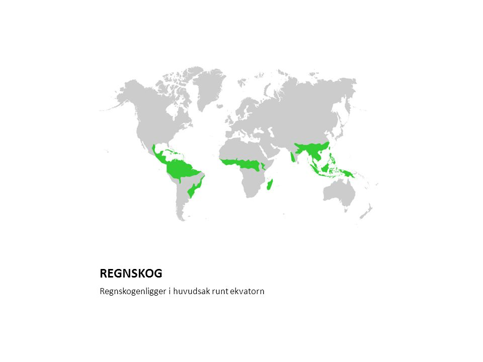 REGNSKOG Regnskogenligger i huvudsak runt ekvatorn