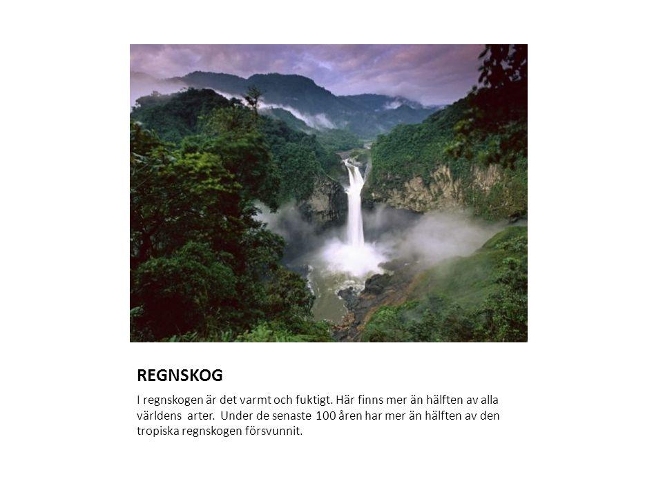 REGNSKOG I regnskogen är det varmt och fuktigt. Här finns mer än hälften av alla världens arter. Under de senaste 100 åren har mer än hälften av den t