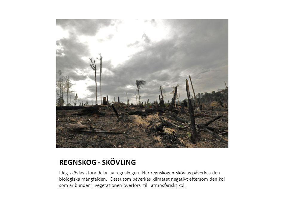 REGNSKOG - SKÖVLING Idag skövlas stora delar av regnskogen. När regnskogen skövlas påverkas den biologiska mångfalden. Dessutom påverkas klimatet nega