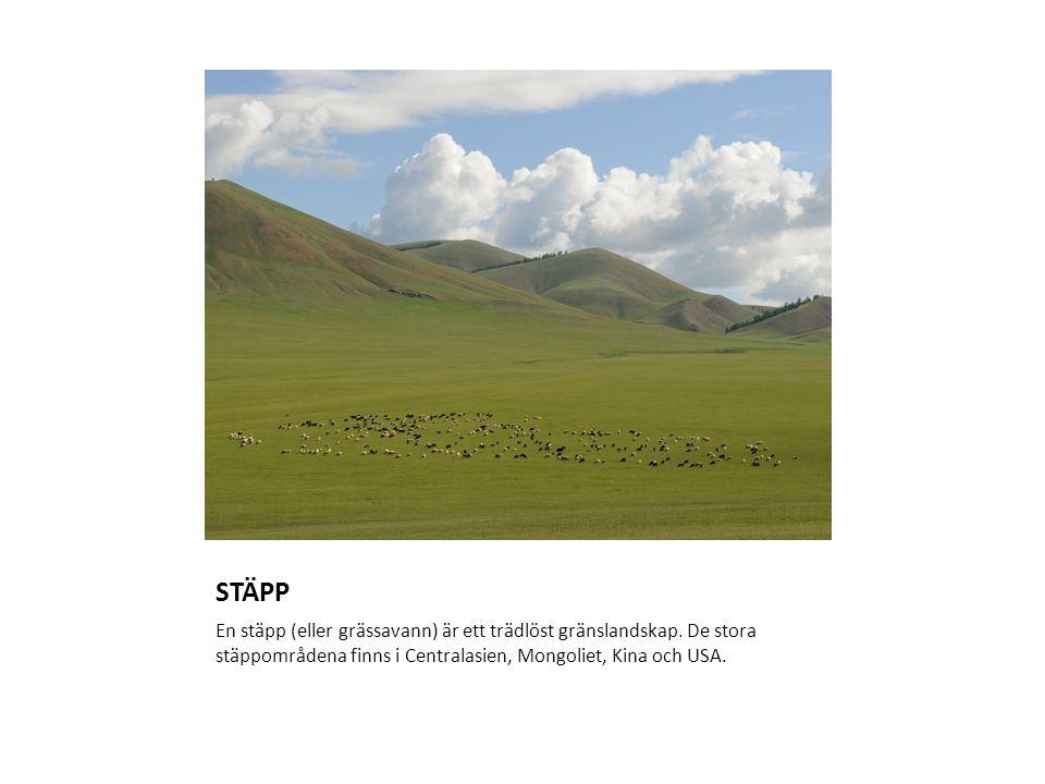 STÄPP En stäpp (eller grässavann) är ett trädlöst gränslandskap. De stora stäppområdena finns i Centralasien, Mongoliet, Kina och USA.