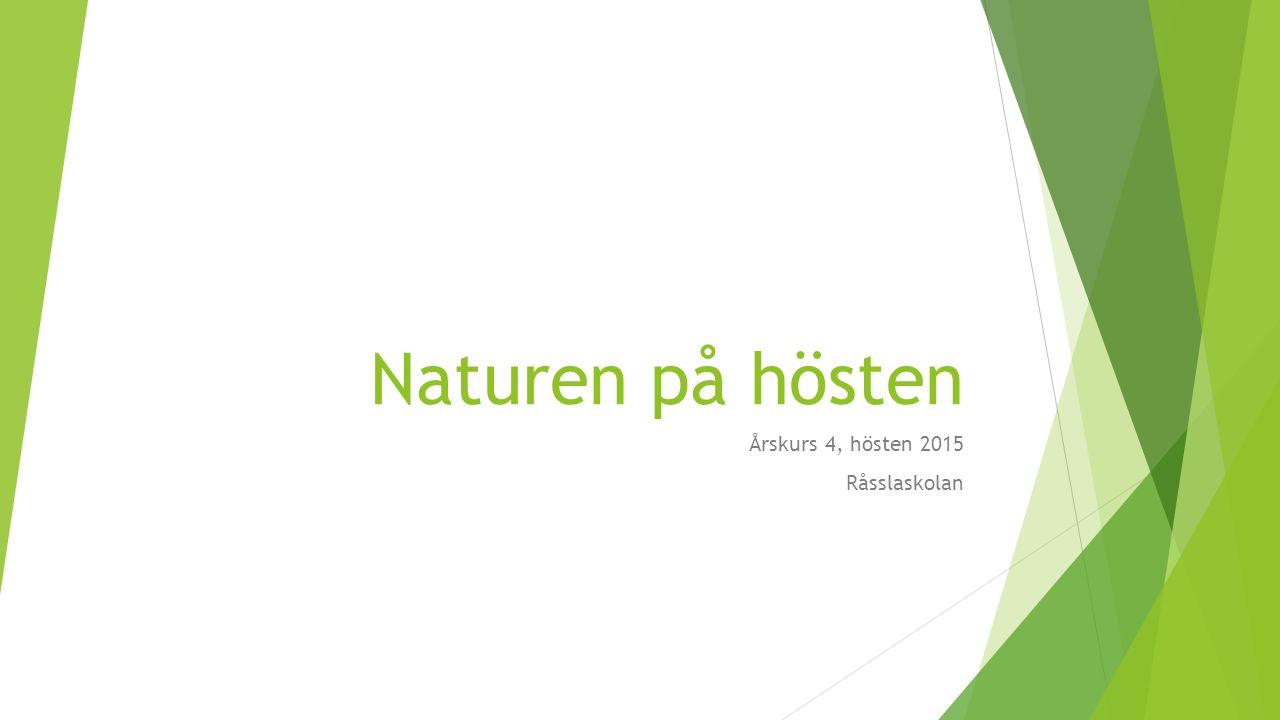 Naturen på hösten Årskurs 4, hösten 2015 Råsslaskolan