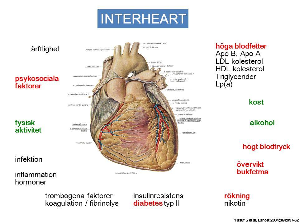 rökning nikotin insulinresistens diabetes typ II psykosociala faktorer höga blodfetter Apo B, Apo A LDL kolesterol HDL kolesterol Triglycerider Lp(a) kost alkohol högt blodtryck övervikt bukfetma trombogena faktorer koagulation / fibrinolys fysisk aktivitet ärftlighet infektion inflammation hormoner INTERHEART Yusuf S et al, Lancet 2004;364:937-52