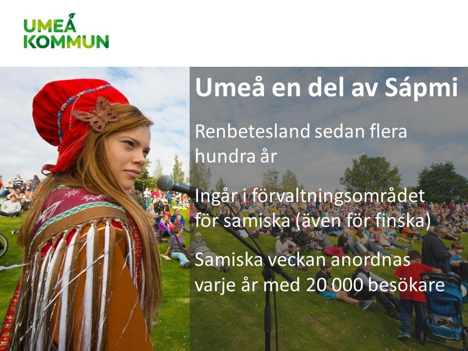 Umeå en del av Sápmi Renbetesland sedan flera hundra år Ingår i förvaltningsområdet för samiska (även för finska) Samiska veckan anordnas varje år med 20 000 besökare