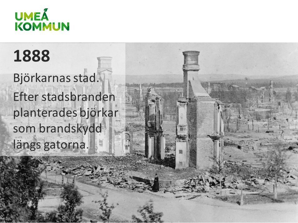 1888 Björkarnas stad. Efter stadsbranden planterades björkar som brandskydd längs gatorna.