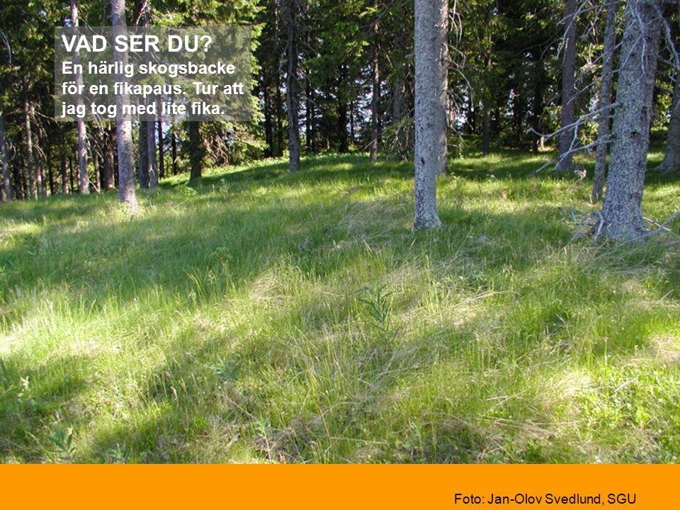 VAD SER DU. En härlig skogsbacke för en fikapaus.