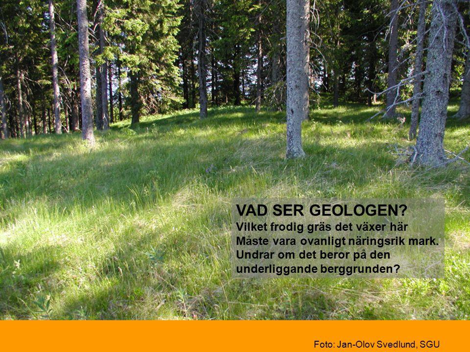 VAD SER GEOLOGEN. Vilket frodig gräs det växer här Måste vara ovanligt näringsrik mark.
