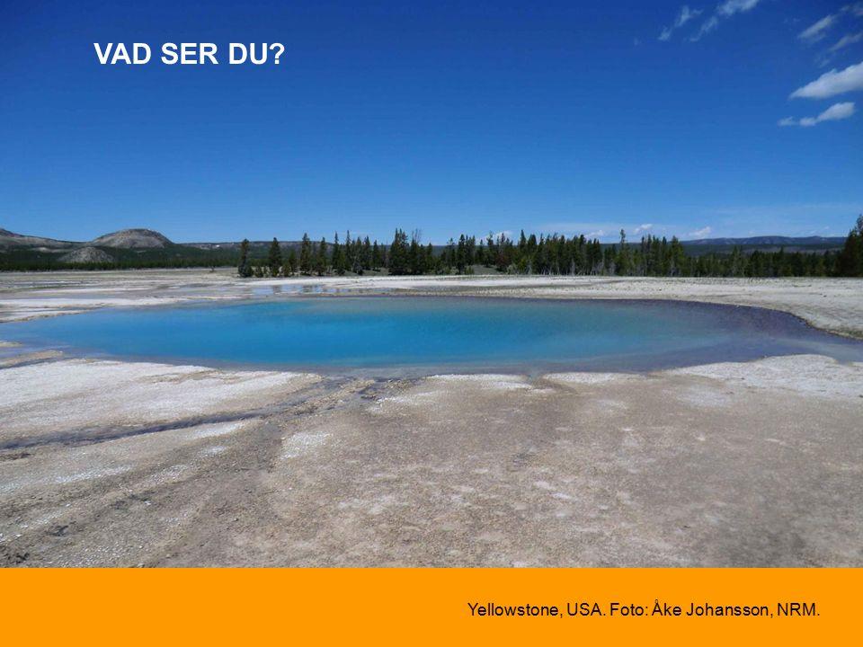 VAD SER DU Yellowstone, USA. Foto: Åke Johansson, NRM.