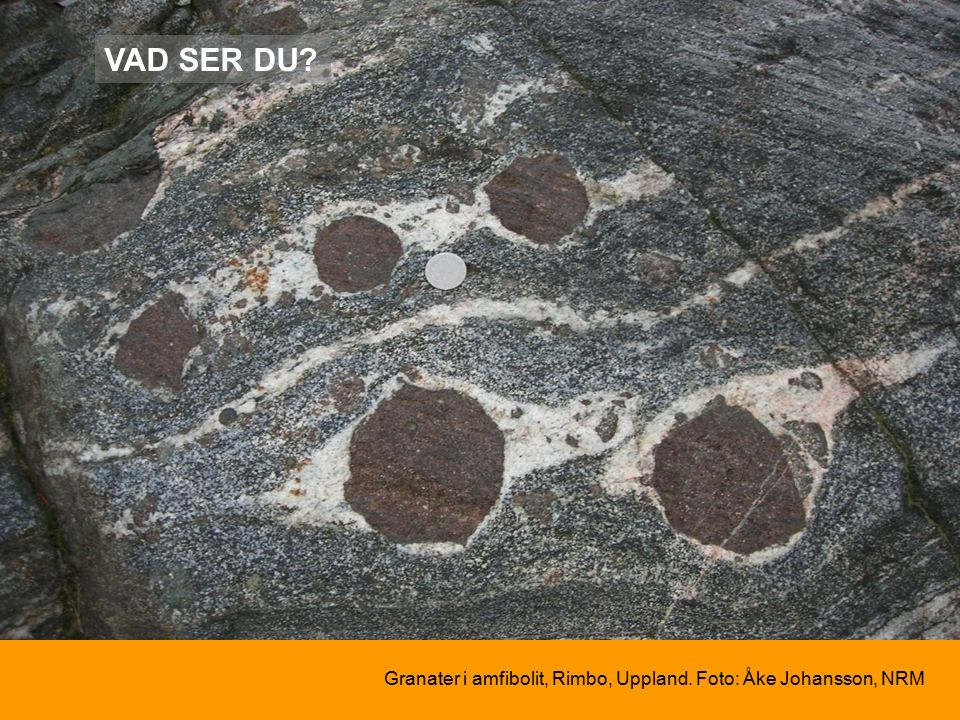 Granater i amfibolit, Rimbo, Uppland. Foto: Åke Johansson, NRM VAD SER DU