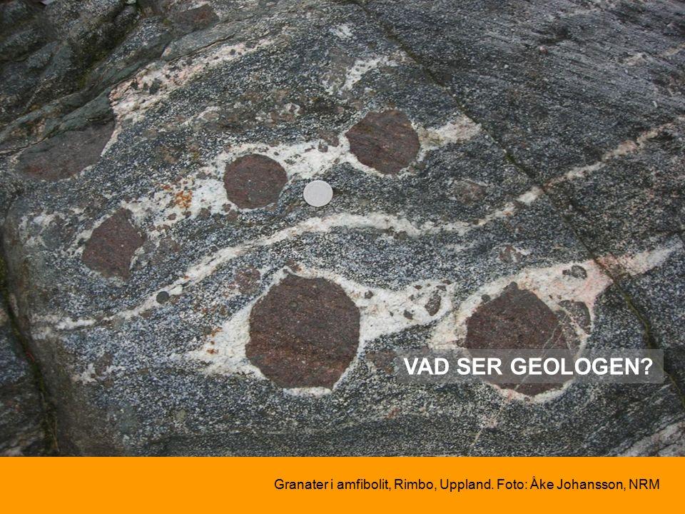 VAD SER GEOLOGEN Granater i amfibolit, Rimbo, Uppland. Foto: Åke Johansson, NRM