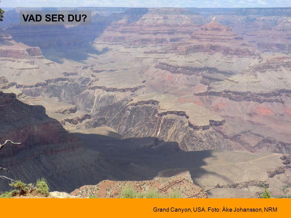 Grand Canyon, USA. Foto: Åke Johansson, NRM VAD SER DU