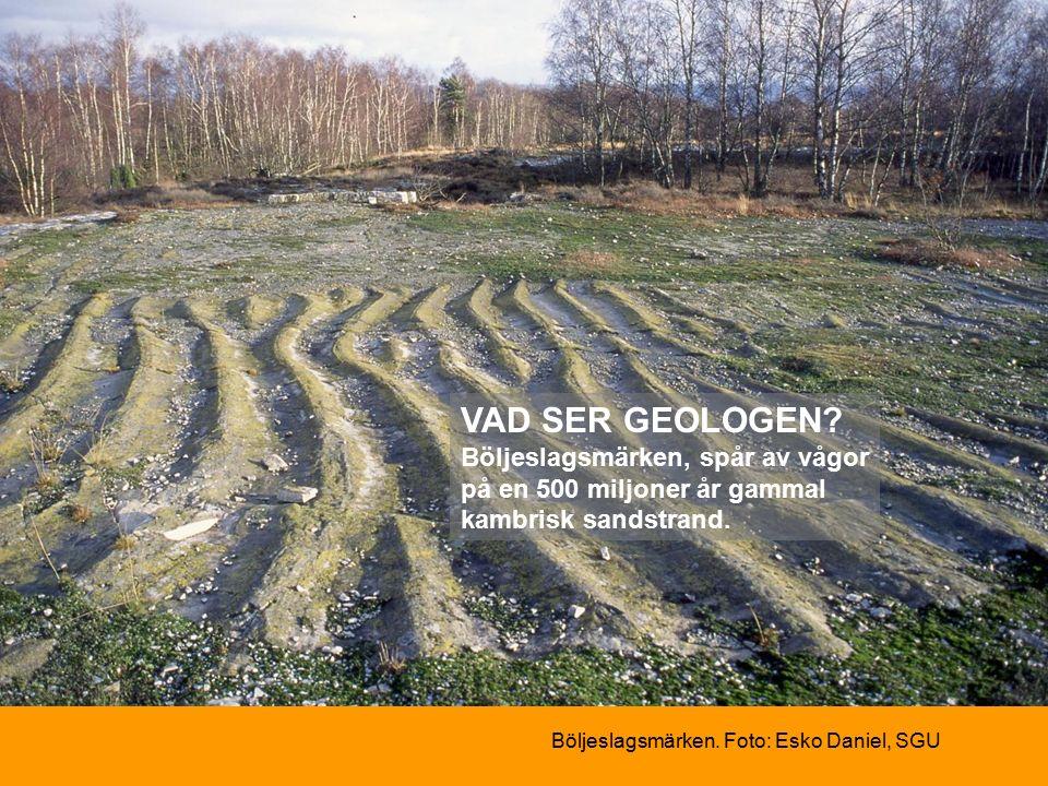 Böljeslagsmärken. Foto: Esko Daniel, SGU VAD SER GEOLOGEN.