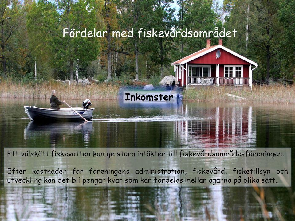 Fördelar med fiskevårdsområdet Inkomster Ett välskött fiskevatten kan ge stora intäkter till fiskevårdsområdesföreningen. Efter kostnader för förening