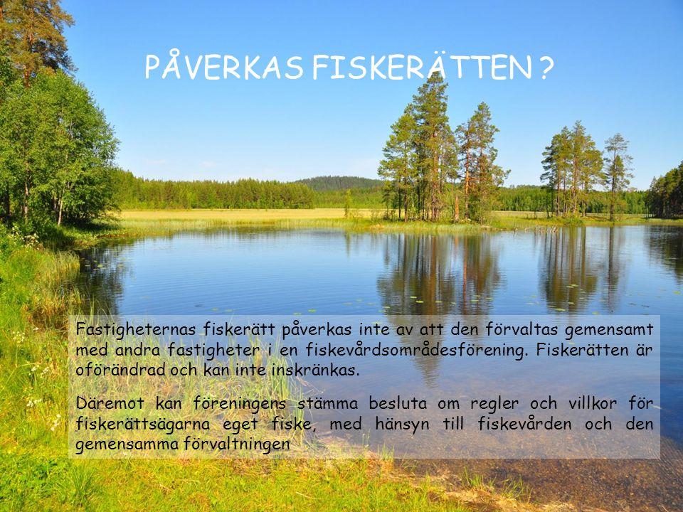 PÅVERKAS FISKERÄTTEN ? Fastigheternas fiskerätt påverkas inte av att den förvaltas gemensamt med andra fastigheter i en fiskevårdsområdesförening. Fis