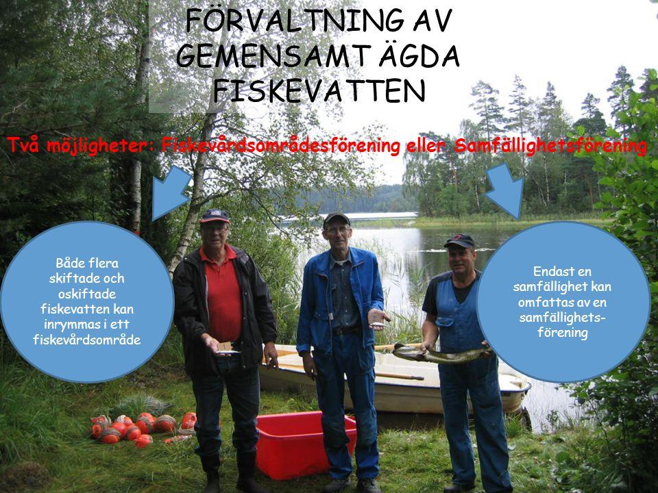 Två möjligheter: Fiskevårdsområdesförening eller Samfällighetsförening FÖRVALTNING AV GEMENSAMT ÄGDA FISKEVATTEN Både flera skiftade och oskiftade fis