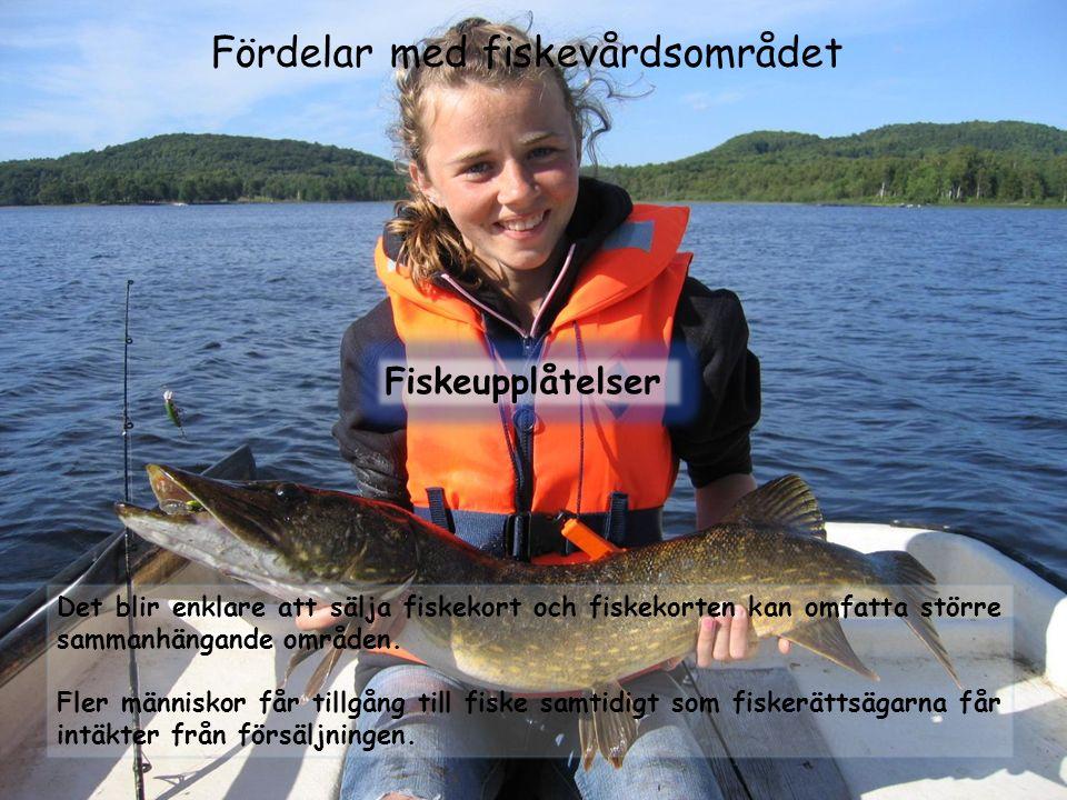 Fördelar med fiskevårdsområdet Fiskeupplåtelser Det blir enklare att sälja fiskekort och fiskekorten kan omfatta större sammanhängande områden. Fler m