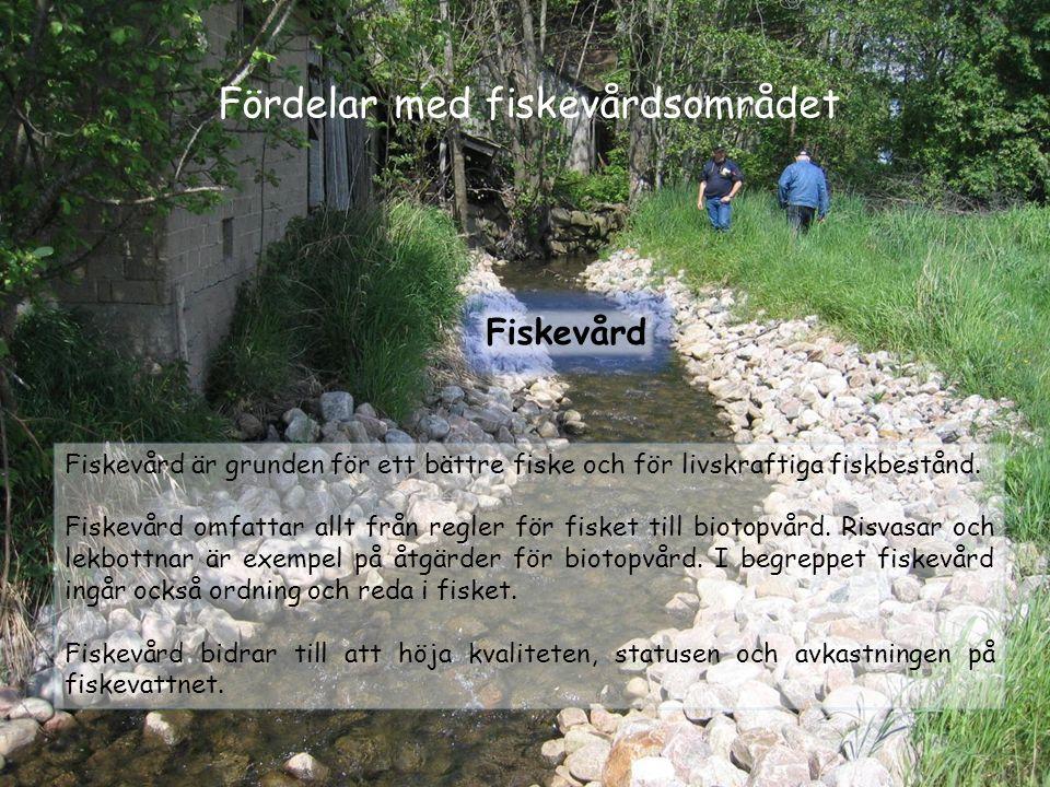 Fördelar med fiskevårdsområdet Fiskevård Fiskevård är grunden för ett bättre fiske och för livskraftiga fiskbestånd. Fiskevård omfattar allt från regl